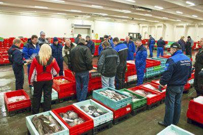 Vi er tilstede hver morgen tidlig på Hanstholm Fiskeauktion for at udvælge den bedste fisk, som vi vil byde på.